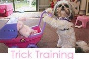Dog Trick Training