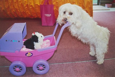 Dog pushing pram